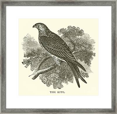 The Kite Framed Print by English School