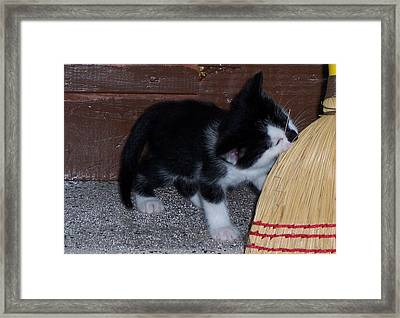 The Kitten And The Broom Framed Print