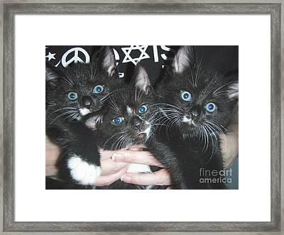 The Kittidiots Framed Print by Kristine Nora