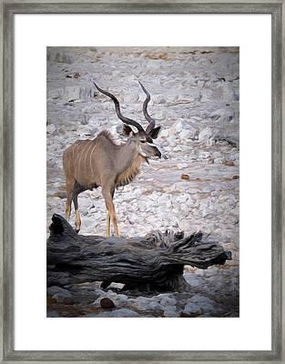 The Kudu In Namibia Framed Print by Ernie Echols