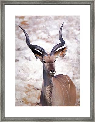 The Kudu Portrait 2 Framed Print by Ernie Echols