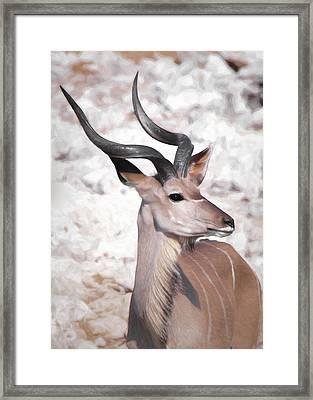 The Kudu Portrait Framed Print by Ernie Echols