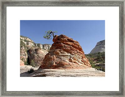 The Land Of Zion Framed Print by David Lee Thompson
