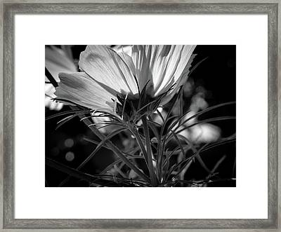The Last Cosmos Framed Print