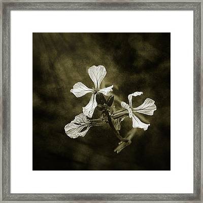 The Last Flowers Of Autumn Framed Print by Scott Norris
