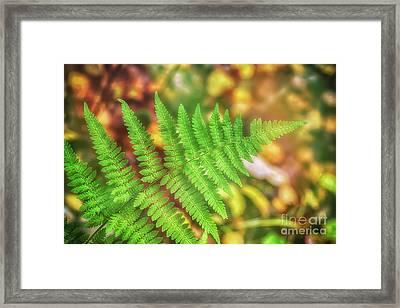 The Last Green Framed Print