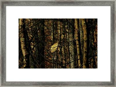 Framed Print featuring the photograph The Last Leaf by Bruce Patrick Smith