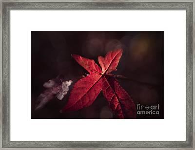 The Last Framed Print by Lisa McStamp