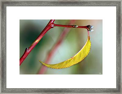 Framed Print featuring the photograph The Last by Martina  Rathgens