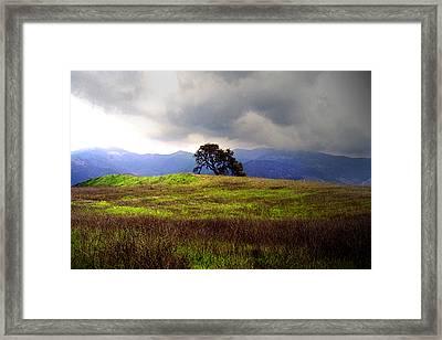 The Last Oak Framed Print