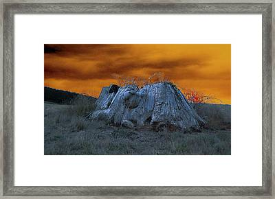 The Last Of The Giant Eucalyptus Viminalis In Wilmot Tasmania Framed Print by Sarah King