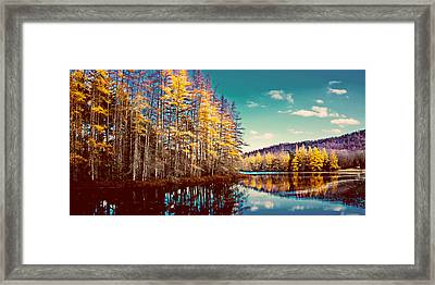 The Last Of The Tamarack Color Framed Print by David Patterson