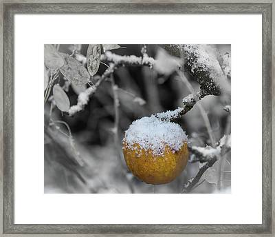 The Last One On The Tree Framed Print