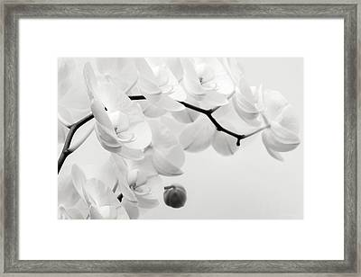 The Last Orchid Framed Print by Wim Lanclus