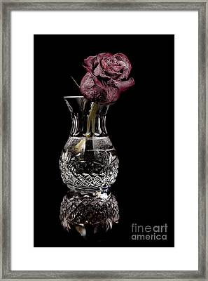 The Last Rose Framed Print