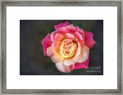 The Last Rose Of Summer, Painting Framed Print