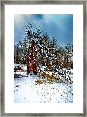 Framed Print featuring the photograph The Last Stand by Shane Bechler