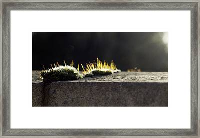 The Last Sun Of December Framed Print