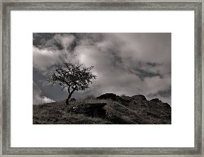 The Last Tree Framed Print by Sean Wareing