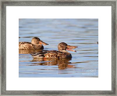 The Laughing Duck Framed Print by Wingsdomain Art and Photography