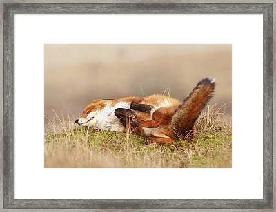 The Laughing Fox Framed Print by Roeselien Raimond