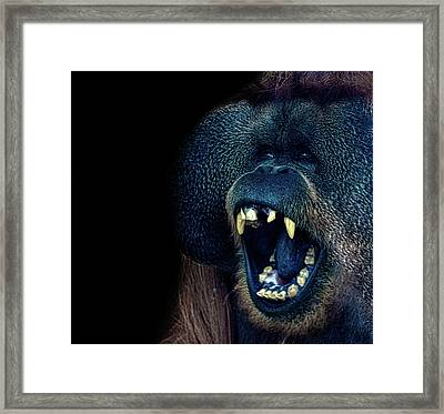 The Laughing Orangutan Framed Print by Martin Newman