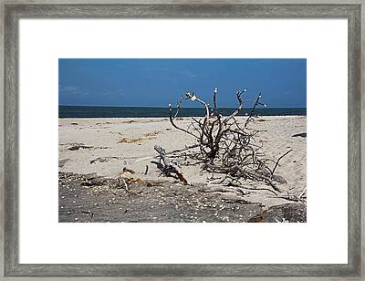 Framed Print featuring the photograph The Laws Of Gravity by Michiale Schneider