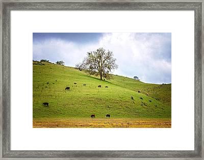 The Lazy Days Of Spring Framed Print by Lynn Bauer