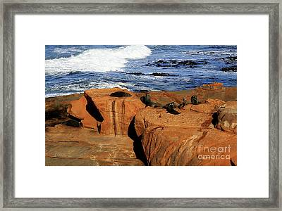 The Lazy Lounging Seals Framed Print