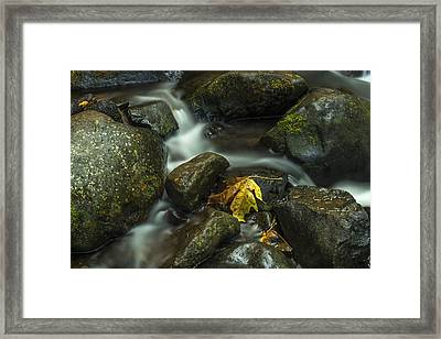 The Leaf Framed Print