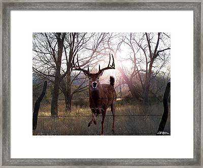 The Leap Framed Print by Bill Stephens