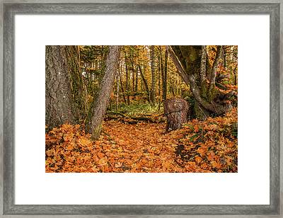 The Leaves Have Fallen Framed Print