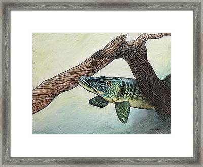 The Legend Of The Susqie Muskie Framed Print