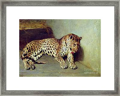 The Leopard Framed Print by John Sargent Noble