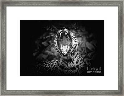 The  Leopard's Tongue Rolling Roar Framed Print