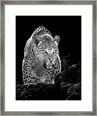 The Leopards Lair Framed Print by Stu  Porter