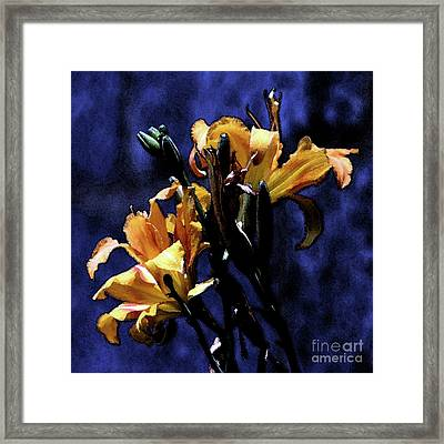 The Life And Death Of A Lily Framed Print