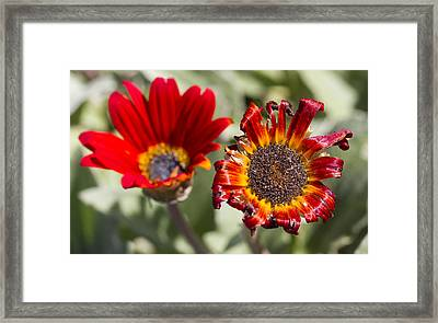 Framed Print featuring the photograph The Life And Death Of A Flower by Nathan Rupert