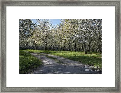 The Life Awakes 1 Framed Print by Bruno Santoro