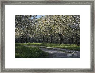 The Life Awakes 2 Framed Print by Bruno Santoro