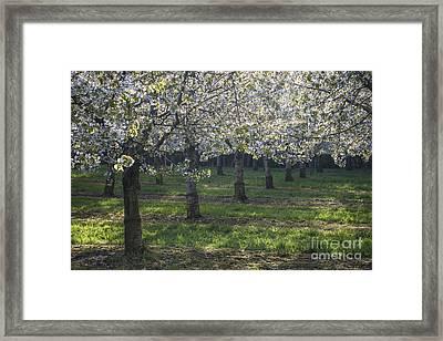 The Life Awakes 5 Framed Print by Bruno Santoro