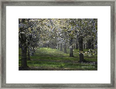 The Life Awakes 6 Framed Print by Bruno Santoro