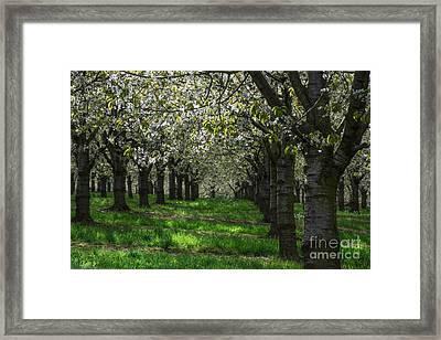 The Life Awakes14 Framed Print by Bruno Santoro