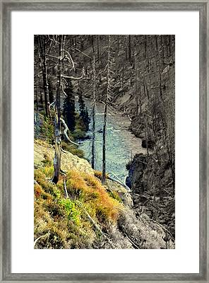 The Life Is Coming Back Framed Print by Aron Chervin