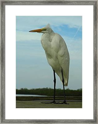 The Life Of Others Framed Print by Juergen Roth