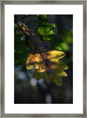 Framed Print featuring the photograph The Light Fell Softly by Odd Jeppesen