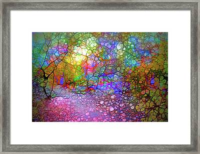 The Light In An Autumn Forest Framed Print