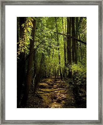 The Light In The Forest Framed Print by TL Mair