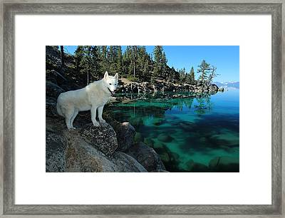 The Light Of Lake Tahoe Framed Print