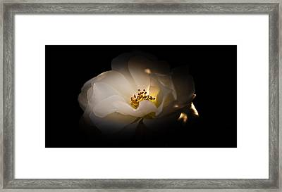 The Light Of Life Framed Print by Loriental Photography